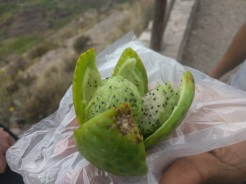 Sancayos Fruit