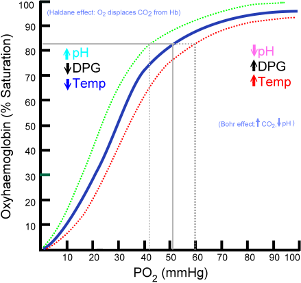 Saturation of hemoglobin is dependent on the partial pressure of oxygen in the arterial blood. The shape is non-linear due to properties of the hemoglobin molecule. Image taken from wikipedia.