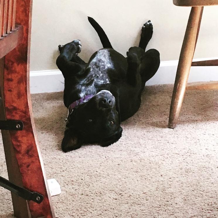 Essence of pup